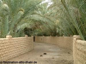 Die Dattelpalmen Al Ains wachsen in Gärten mit traditionellem Bewässerungssystem.