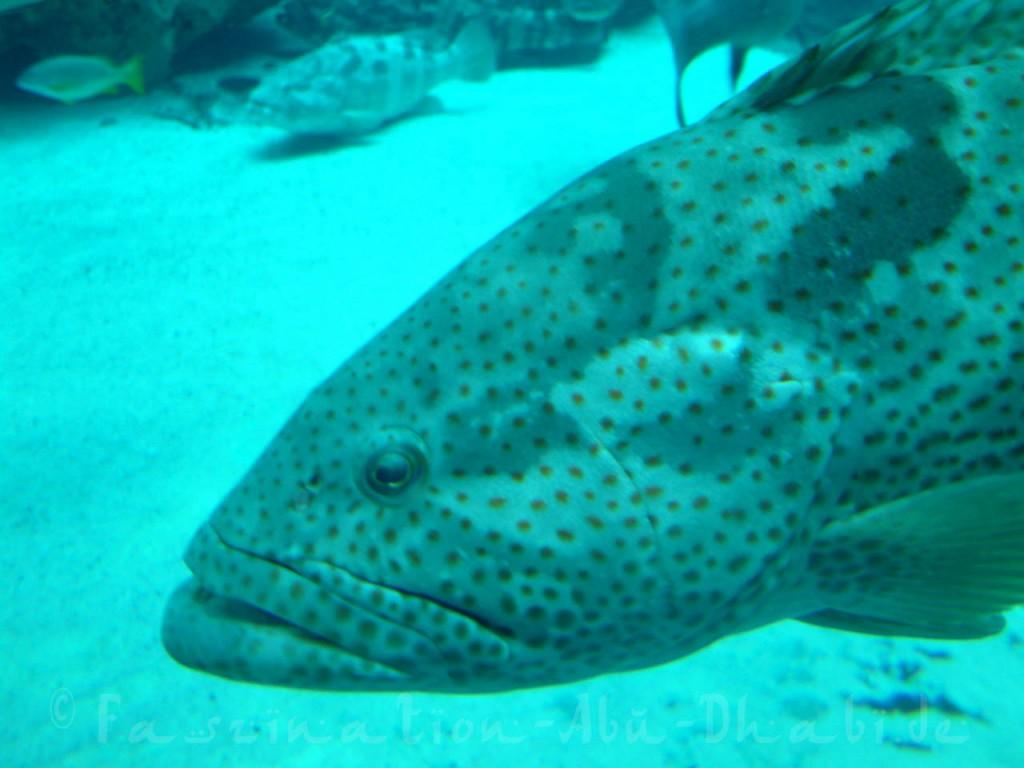 Interessante Begegnungen im Lost Chambers Aquarium des Atlantis Hotels